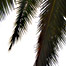 long_palm_fronds